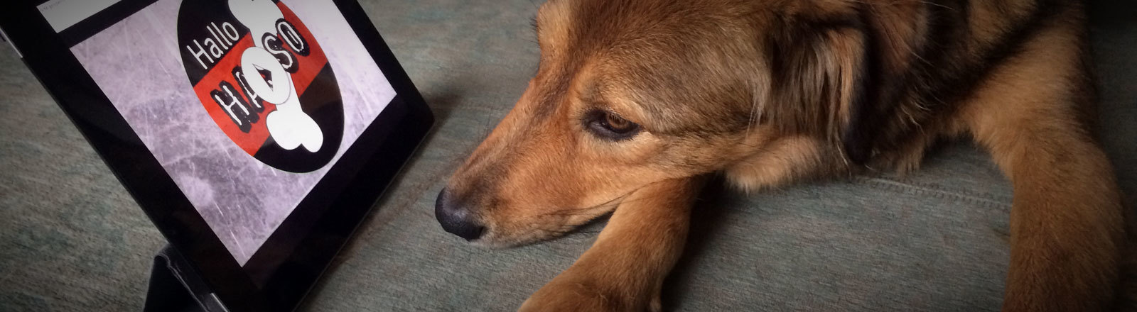 Lulu hört Hallo Hasso