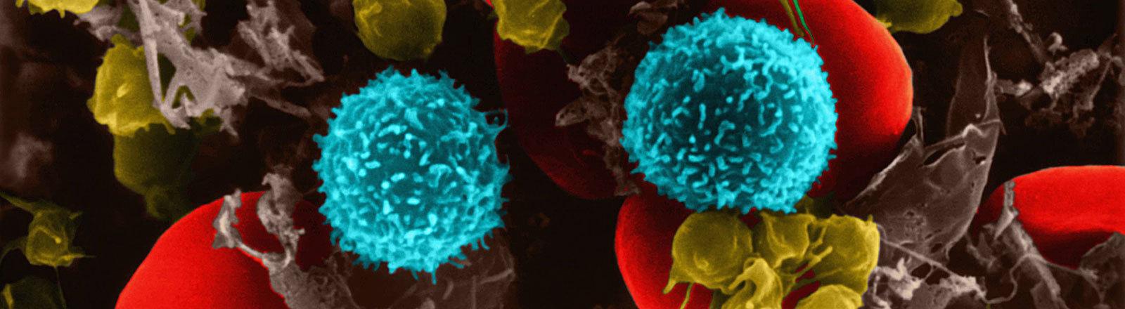 T-Zellen und Blutzellen