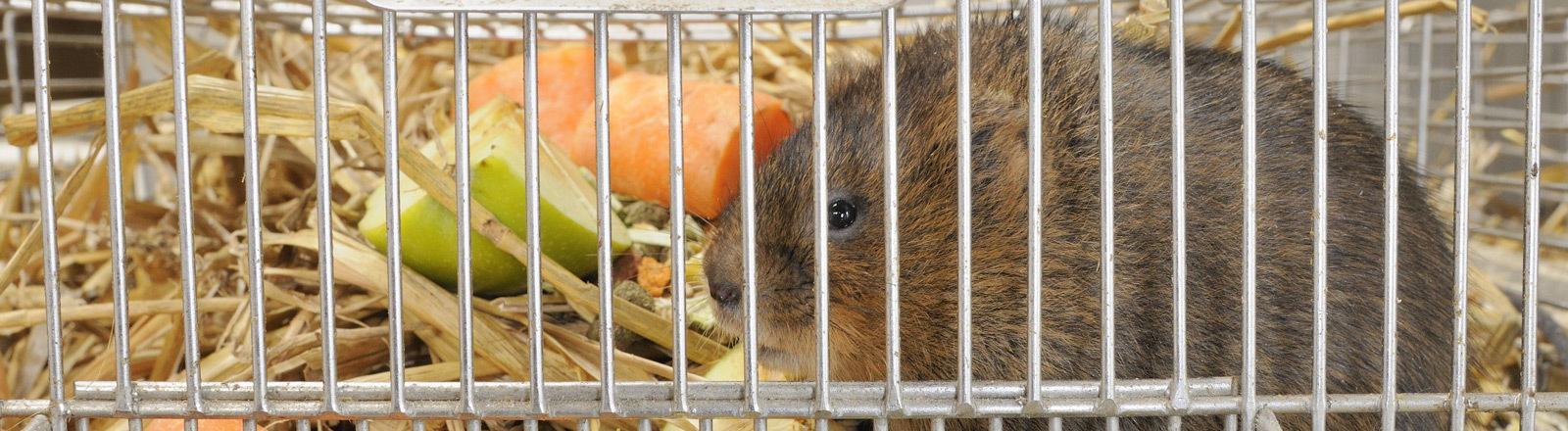 Ein Hamster sitzt in einem Käfig.