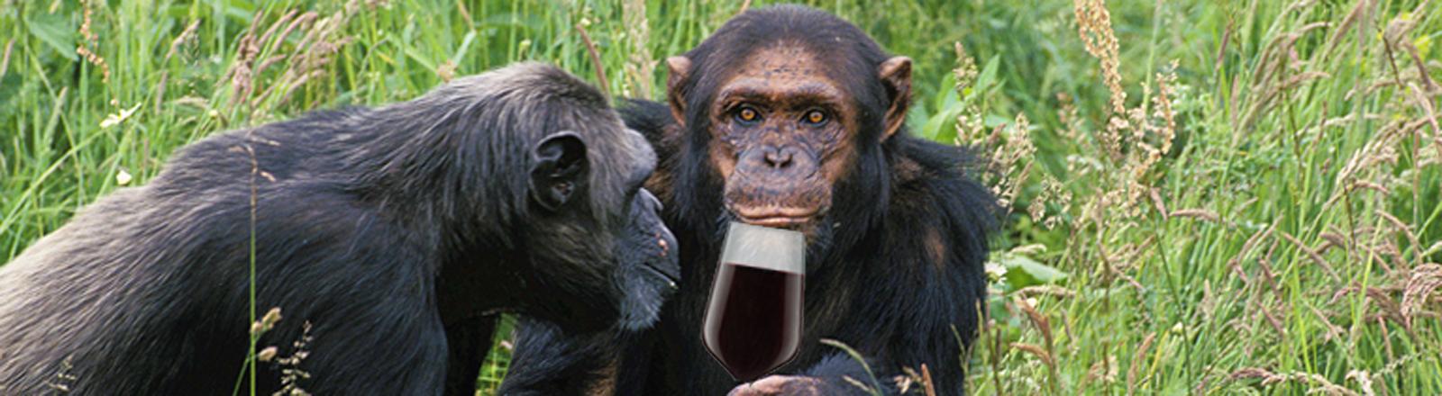Affen trinken Wein. Haha. Ein Gag. Eine Fotomontage.