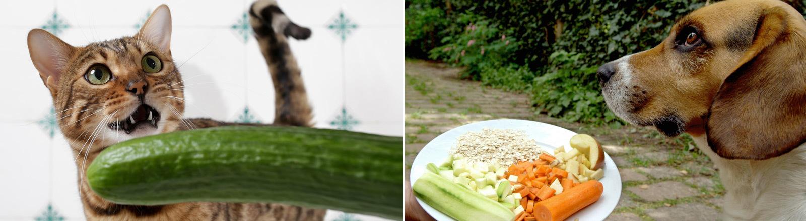Eine Katze mit einer Gurke und ein Hund mit mit einem Gemüseteller.