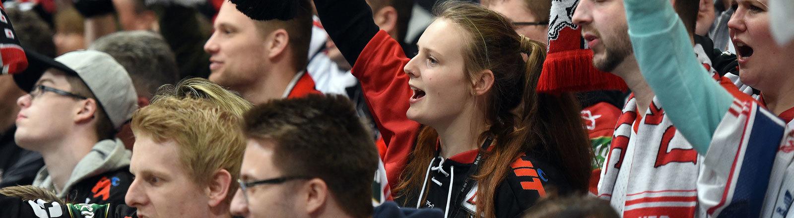 Eishockey: DEL, Kölner Haie - EHC München, Meisterschaftsrunde, Halbfinale, 2. Spieltag am 01.04.2016 in Lanxess Arena, Köln. Kölner Fans feiern ihre Mannschaft.