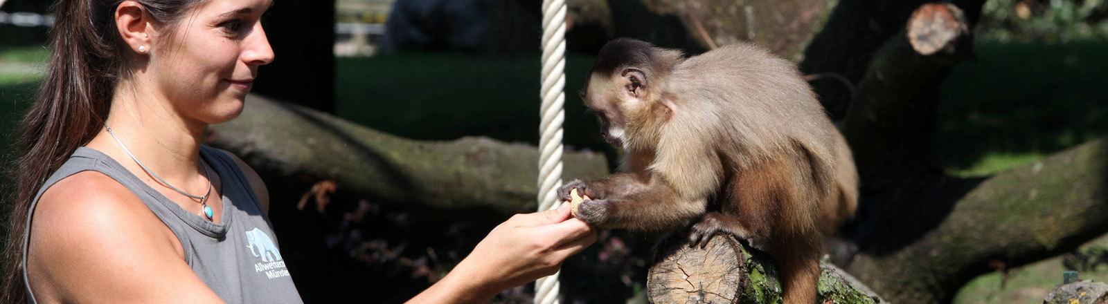 Tierpflegerin mit Kapuzineraffen im Zoo in Münster