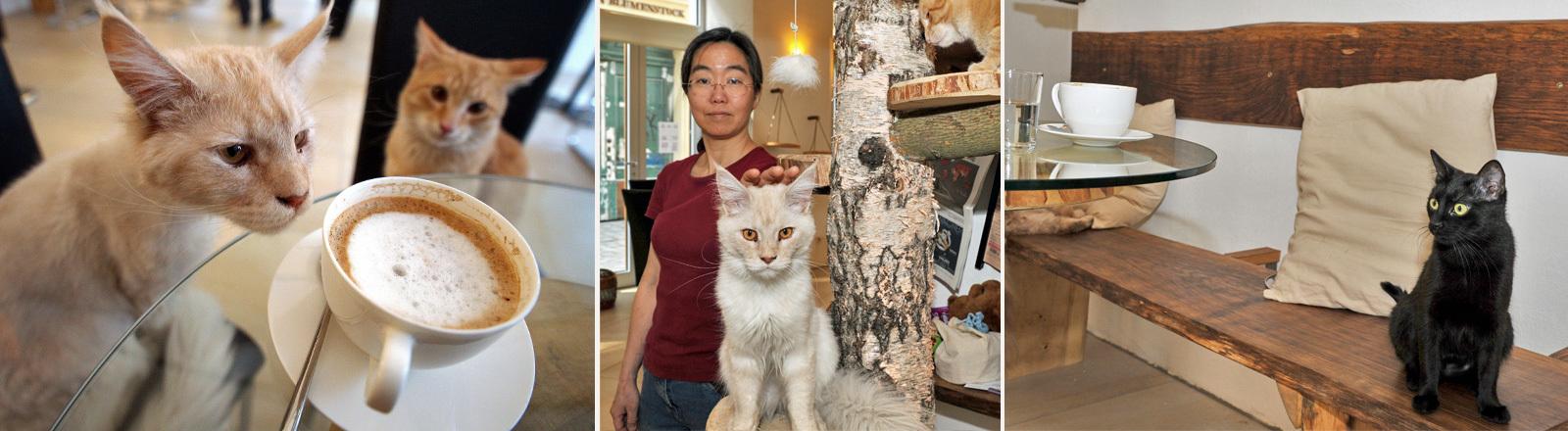 Fotos aus einem Katzencafe in Wien, das von einer Japanerin betrieben wird.