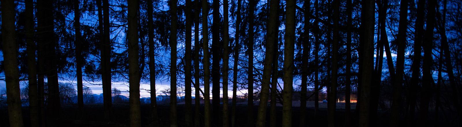 Wald bei Nacht.