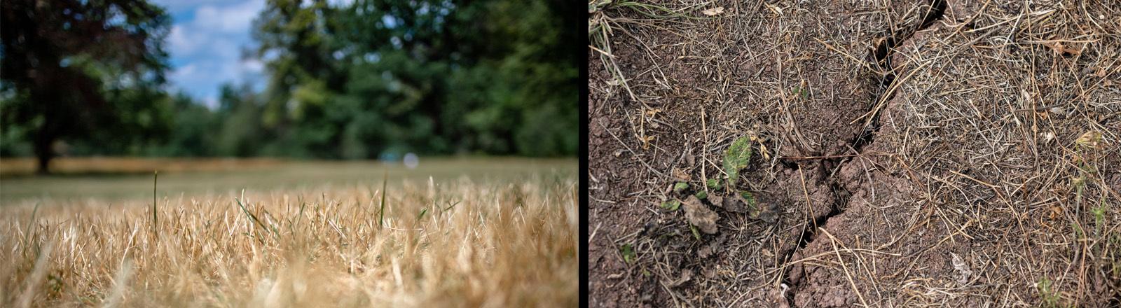 Eine ausgedörrte Wiese im Park neben einen Riss im trockenen Boden