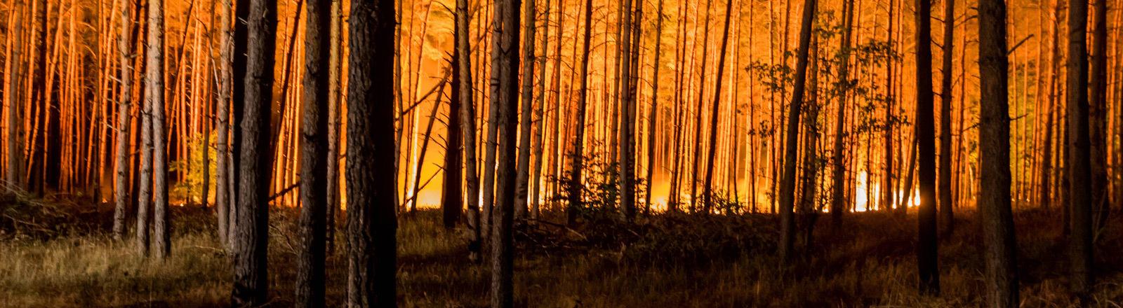 Waldbrand in Brandenburg.