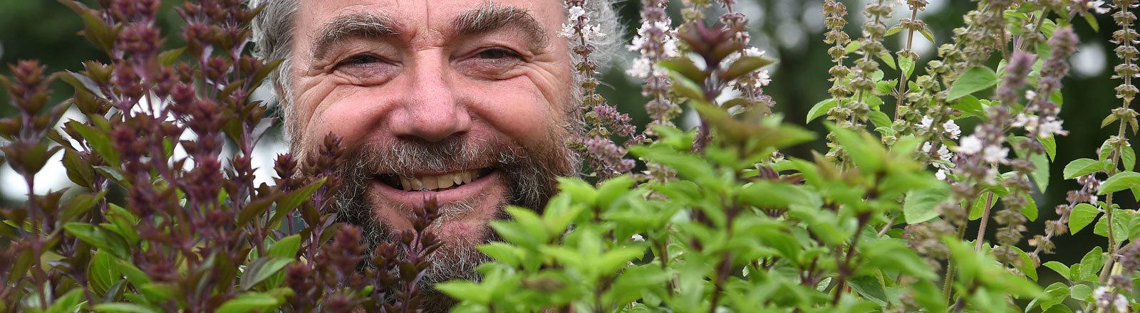 """Herbert Vinken, Inhaber der """"Herb's Bioland-Gärtnerei"""", hält Töpfe mit Basilikum, """"African Blue"""" (l), """"African White"""" (r) und """"Russisches Basilikum"""" in seinen Händen."""