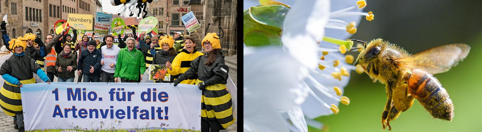 Teilnehmer des Volksbegehren zur Bienenrettung in München und eine Biene.
