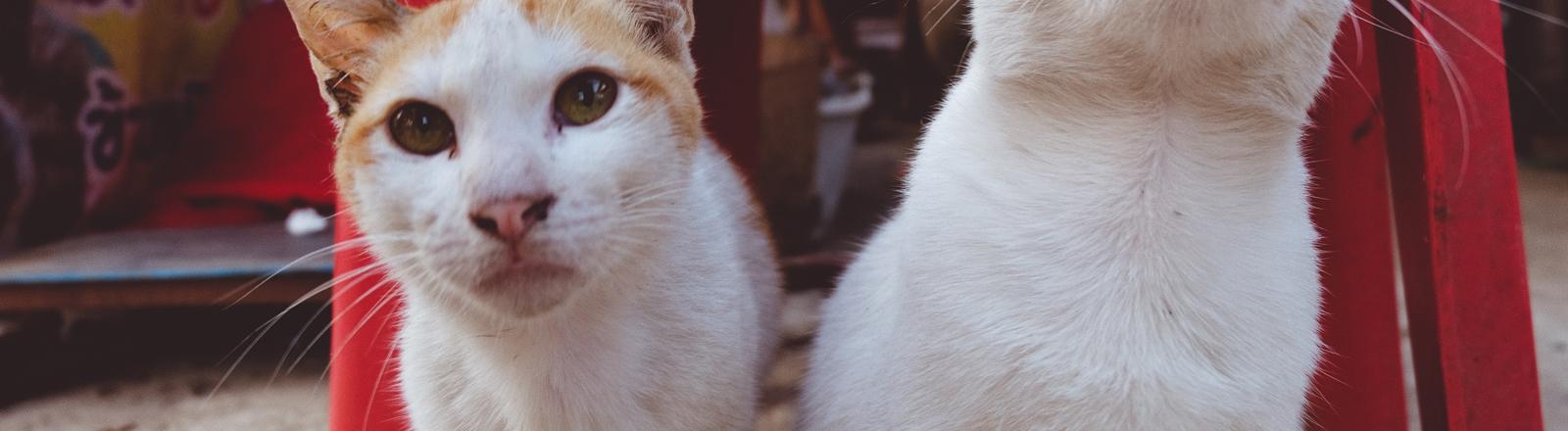 Zwei Katzen