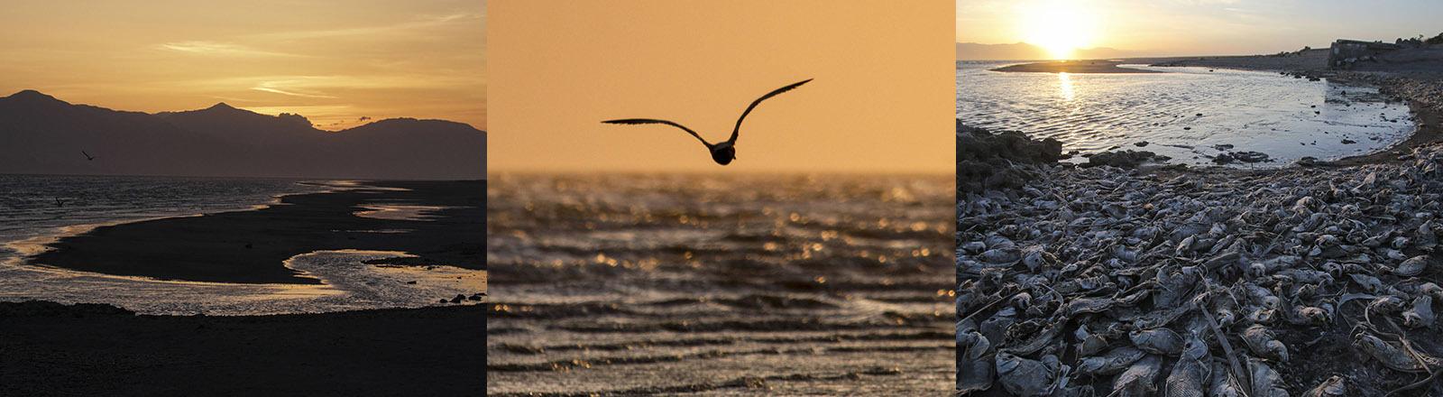 Salton Sea in Kalifornien.