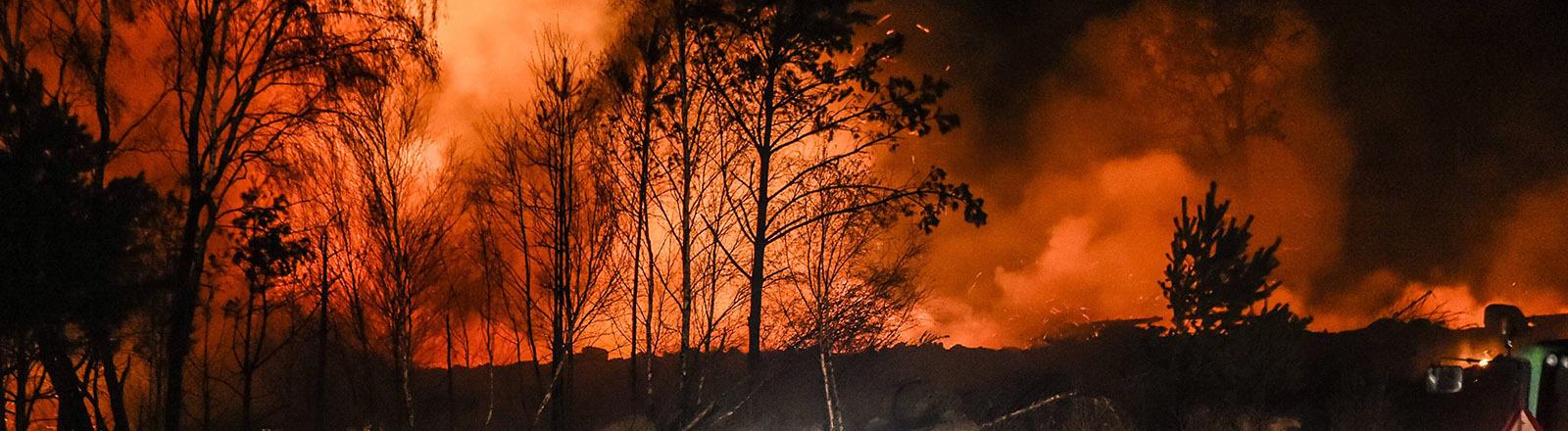 Ein Wald brennt, davor Löschfahrzeuge und Traktoren.