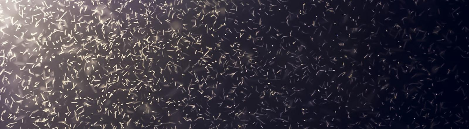 Zu sehen sind viele Mücken, die in einem Lichtkegel besonders gut deutlich zu erkennen sind.