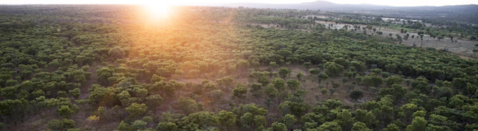 Wald in Nambia von oben fotografiert. Zu sehen ist die
