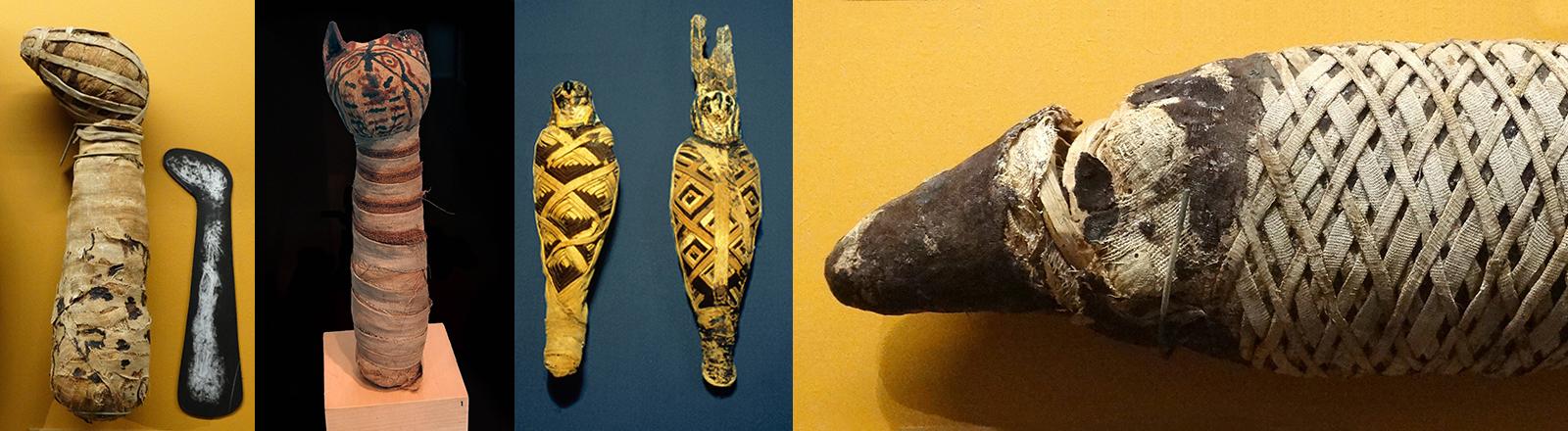 Mumifizierte Tiere, die mit Stoff umwickelt sind: eine Katzte, ein Hund, ein Falke und ein Krokodil.