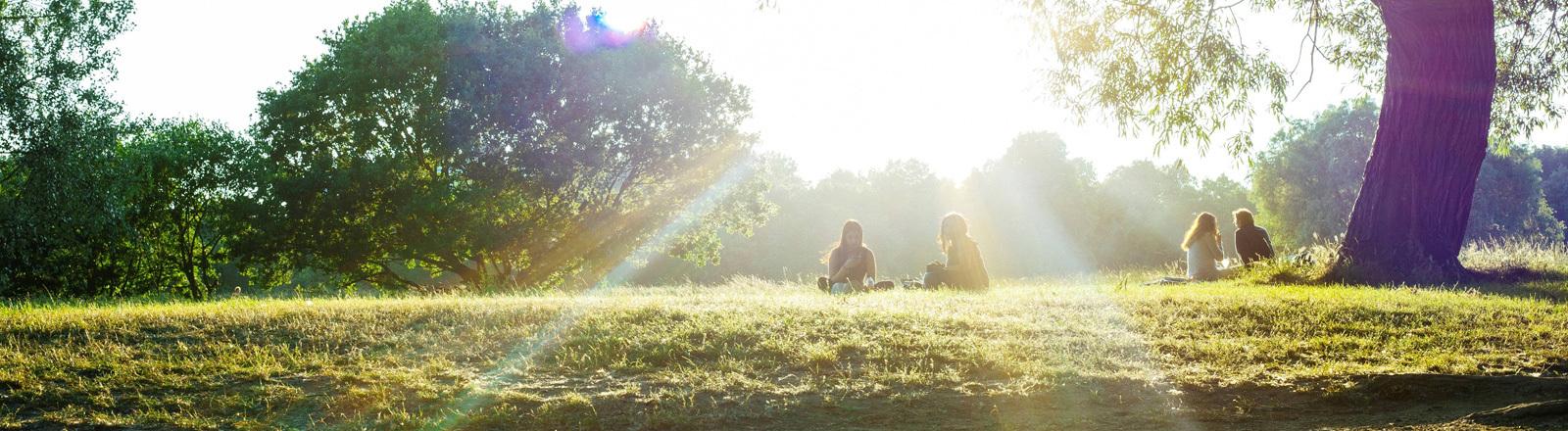 Sonnenschein im Park.