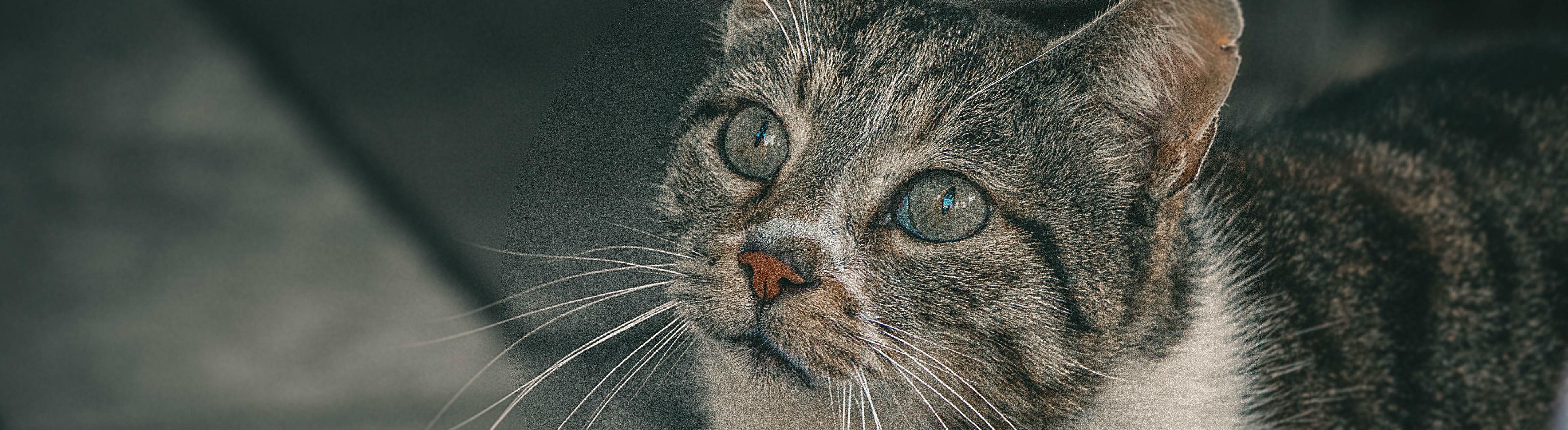Katze auf der Straße, die hungrig nach oben schaut.