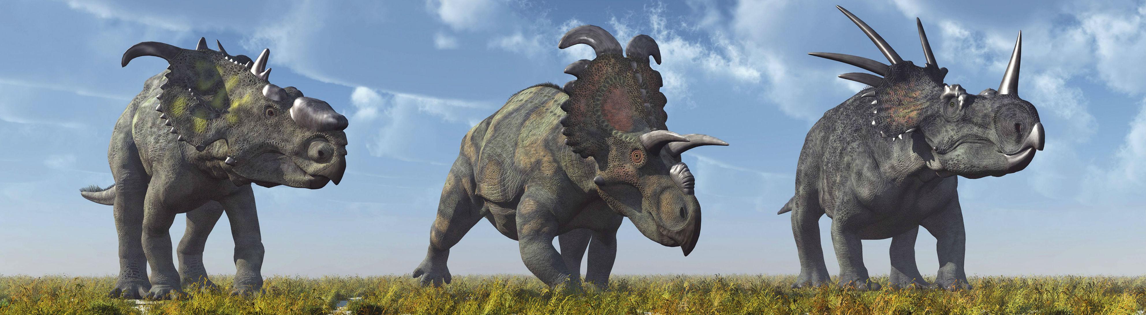 Ein Pachyrhinosaurus, ein Albertaceratops und ein Styracosaurus ceratopsian Dinosaurier.
