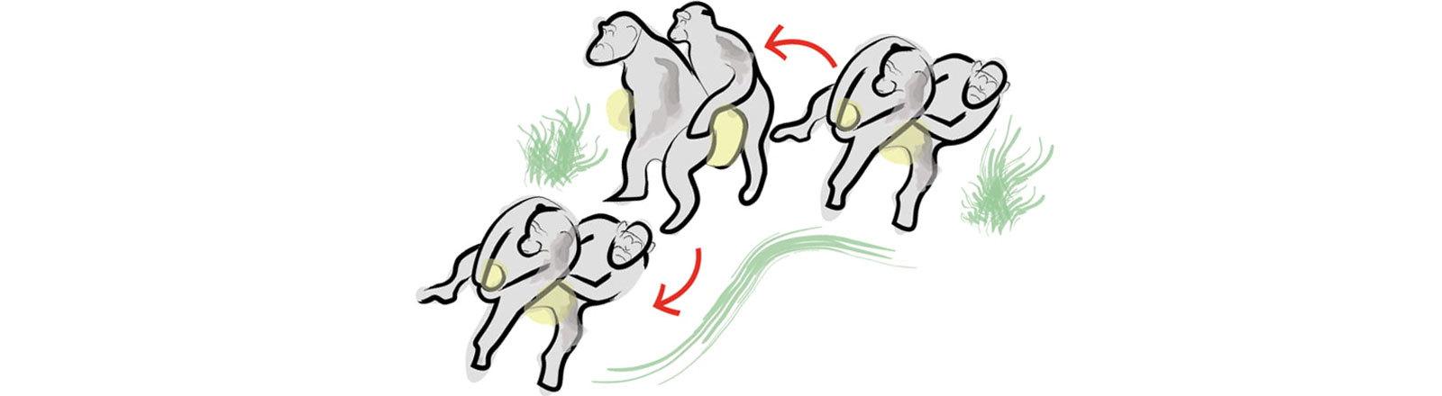 Schimpansen, die Polonaise Blankenese tanzen.