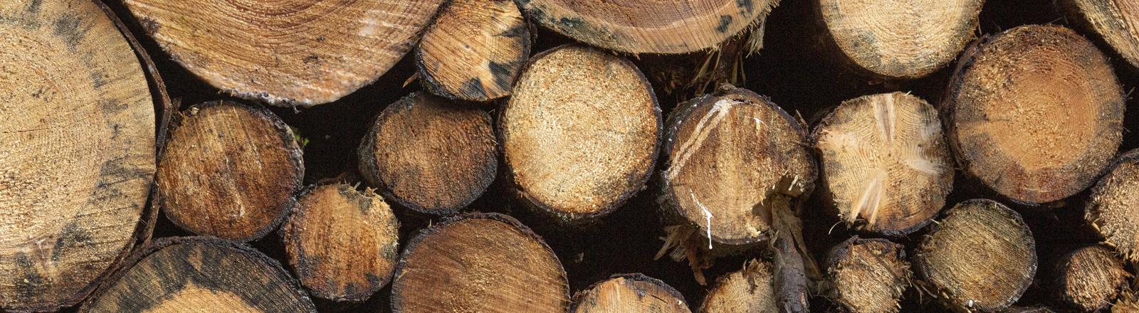Nutzholz aus dem Thüringer Wald