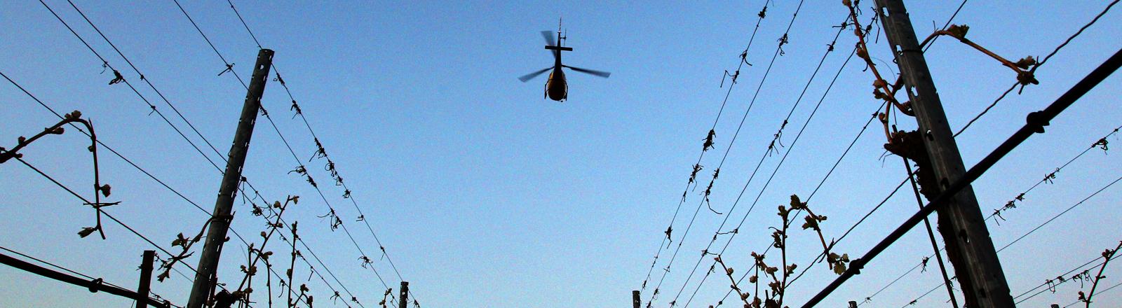 Ein Hubschrauber über den Weinbergen bei Sommerach. Die Rotoren sollen dabei wärmere Luftschichten nach unten drücken und so die Pflanzen vor Frost schützen.