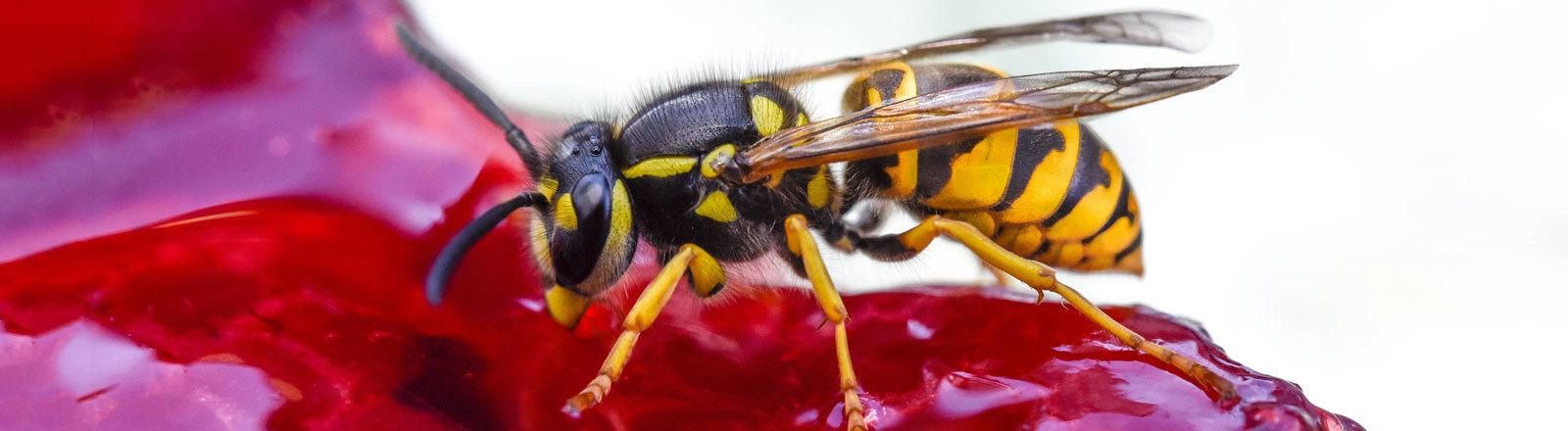 Eine Wespe sitzt auf einem Stück Kuchen.