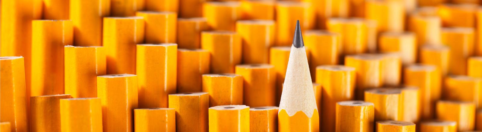 Viele gelbe Bleistifte.