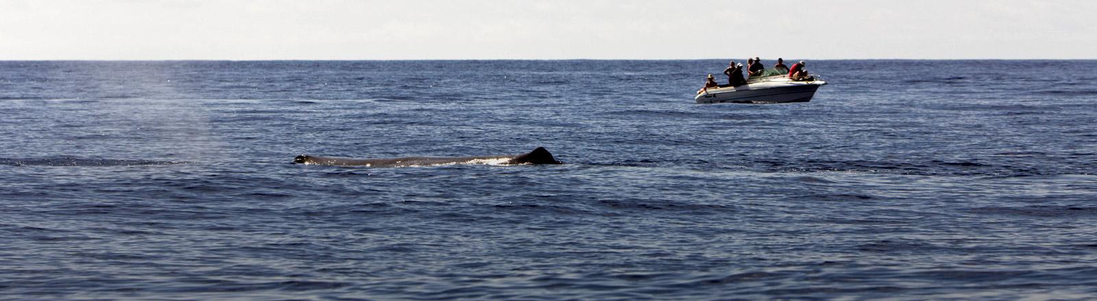 Menschen beobachten von einem Boot einen Wal