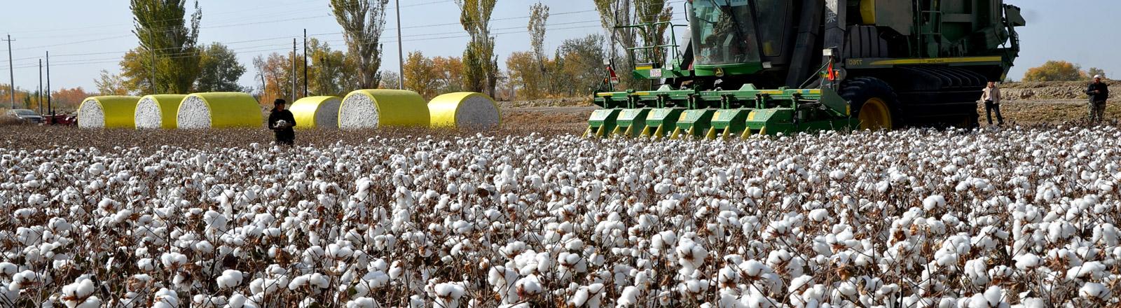 Eine Baumwoll-Erntemaschine auf einem Baumwollfeld