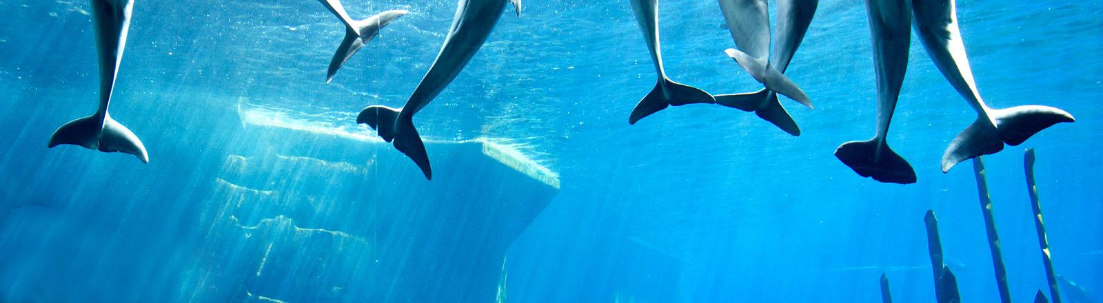 Delfine in einem Delfinarium