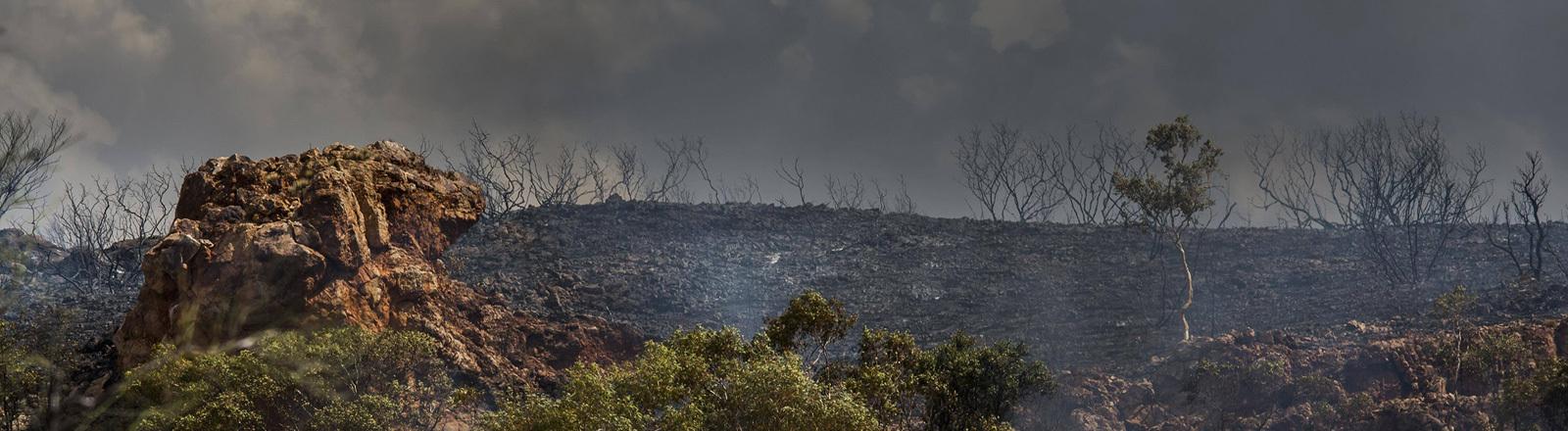 Buschbrände in Australien. Foto vom 21.1.2019