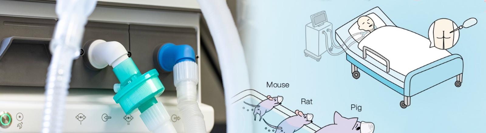 Links Beatmungsschläuche, rechts ein grafisches Modell einer rektalen Beatmungsmethode
