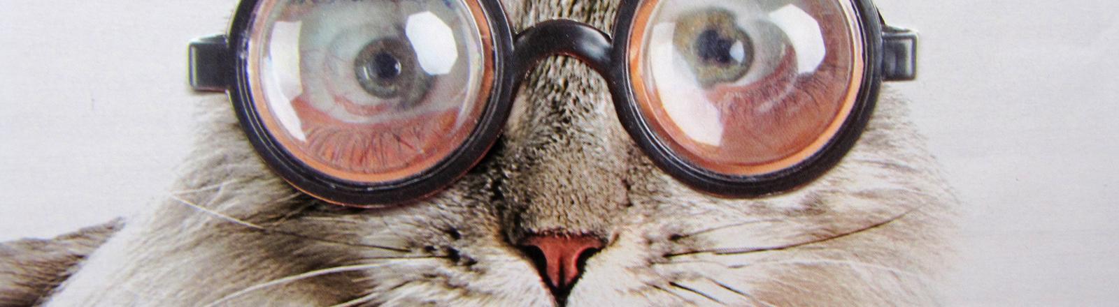 Katze mit Brille.