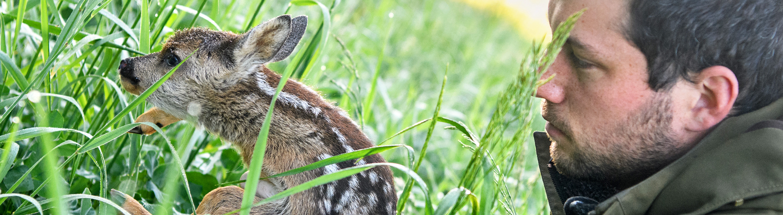 Jäger Rupprecht Walch mit einem Rehkitz im hohen Gras.
