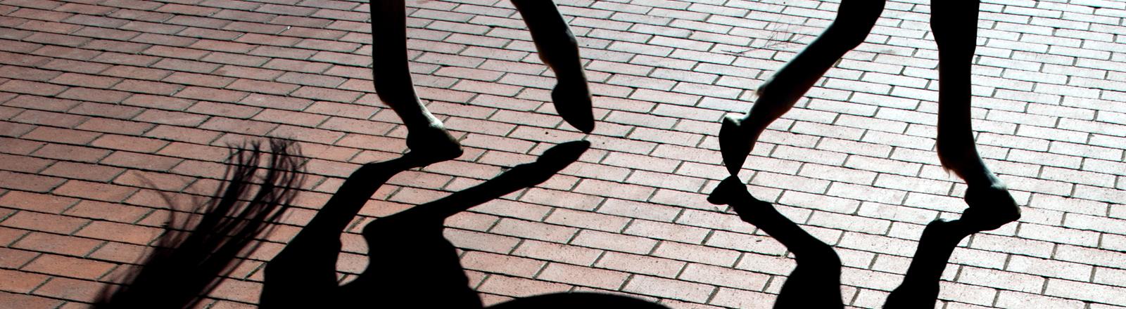 Schatten eines Pferdes auf dem Pflaster des Pferdezentrums Bad Saarow der Freien Universität Berlin.