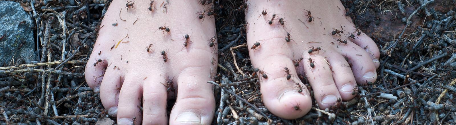 Nackte Füße an denen Ameisen hochkrabbeln stehen auf einem Waldboden