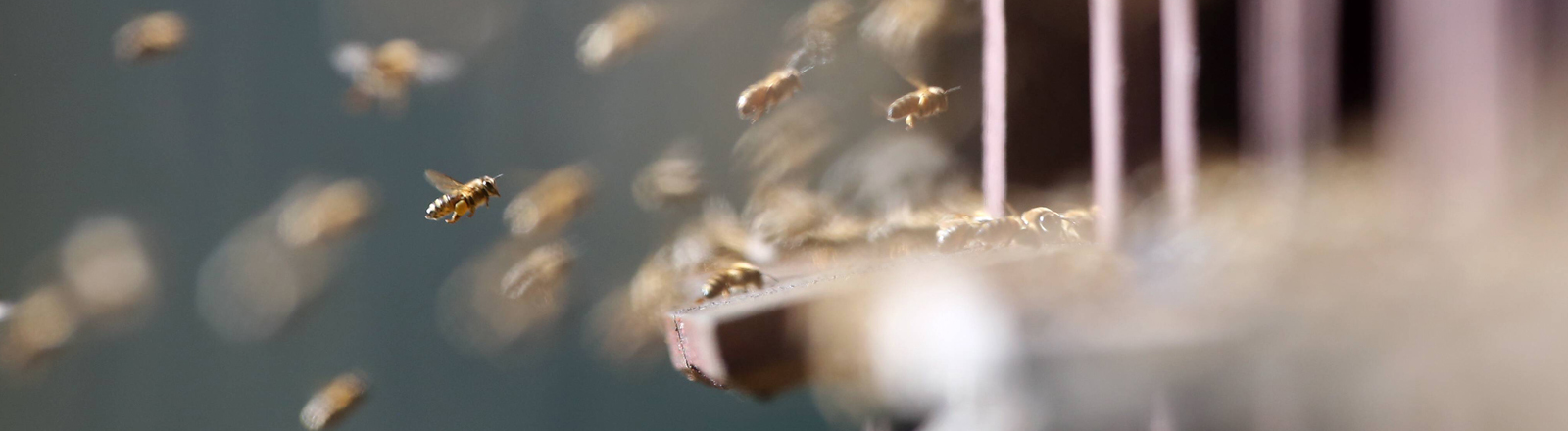 Bienen fliegen in einen Stock