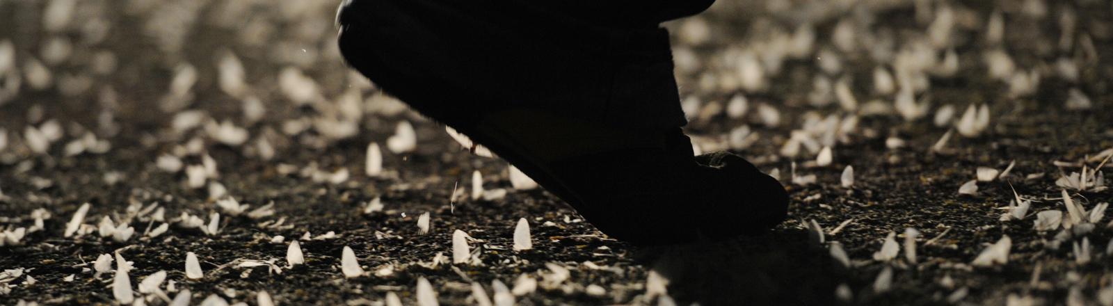 Toten Fliegen auf Straße