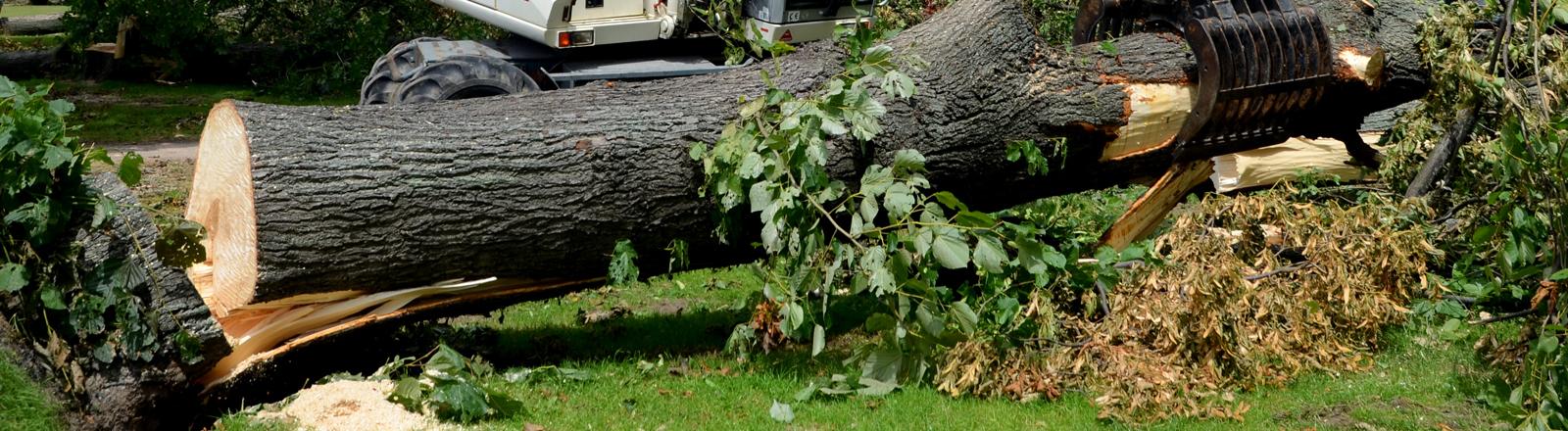 Aufräumarbeiten nach Unwetter in Düsseldorf schreiten voran.Ein Bagger hebt bei Aufräumarbeiten nach dem verheerenden Pfingst-Orkan Ela am 20.06.2014 in Düsseldorf (Nordrhein-Westfalen) einen Baumstamm von einem Gehweg .
