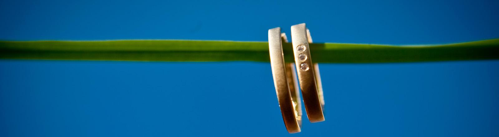 Zwei Goldringe hängen an einem Grashalm