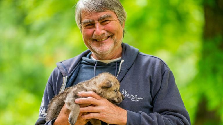 Verhaltensbiologe Kurt Kotrschal mit einem Wolfswelpen.