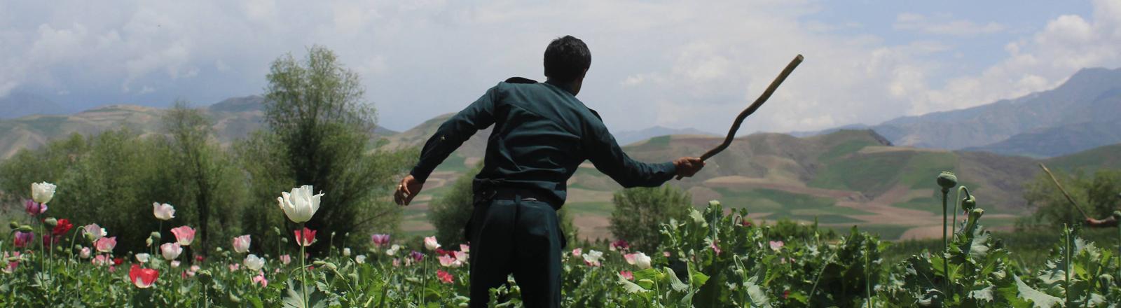 Ein Mann auf einem Opiumfeld in Afghanistan