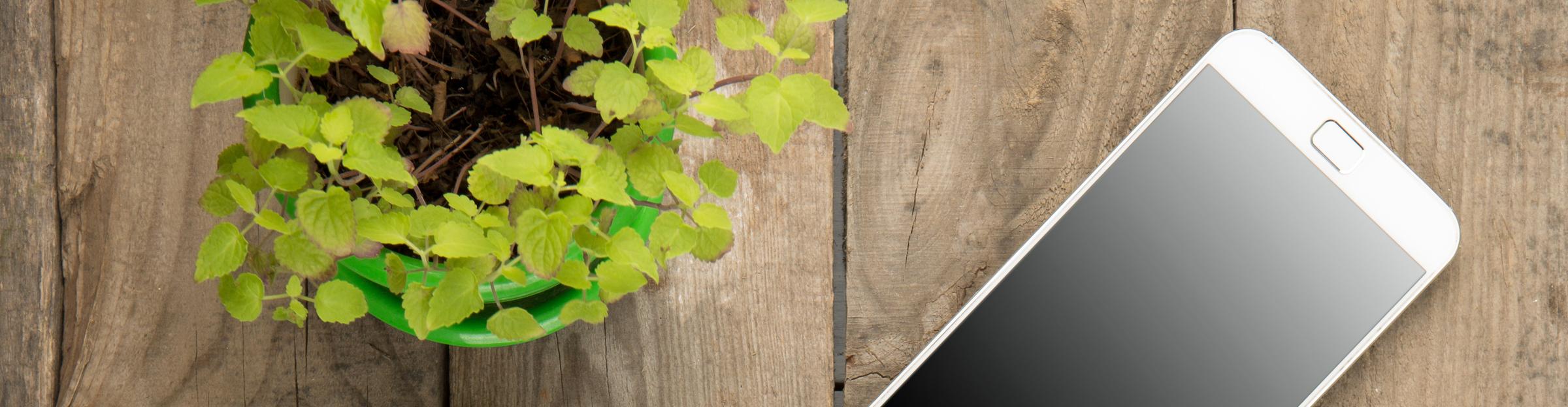 Smartphone auf einem Holztisch mit einer Kleepflanze