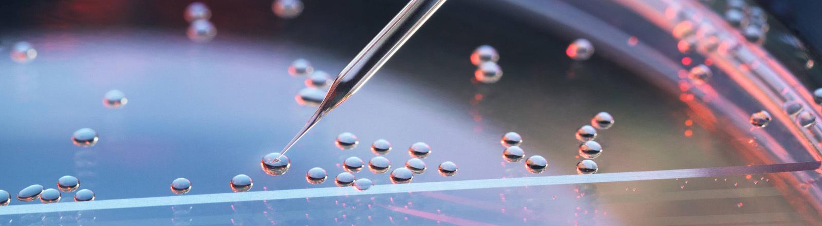 Stammzellen werden untersucht