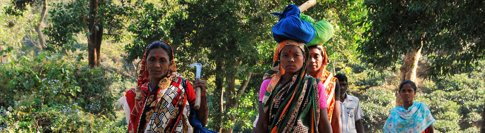 Teearbeiterinnen in Bangladesch