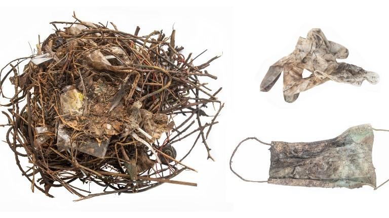 Weggeworfene OP-Masken und medizinische Handschuhe sind in einem Vogelnest verbaut.