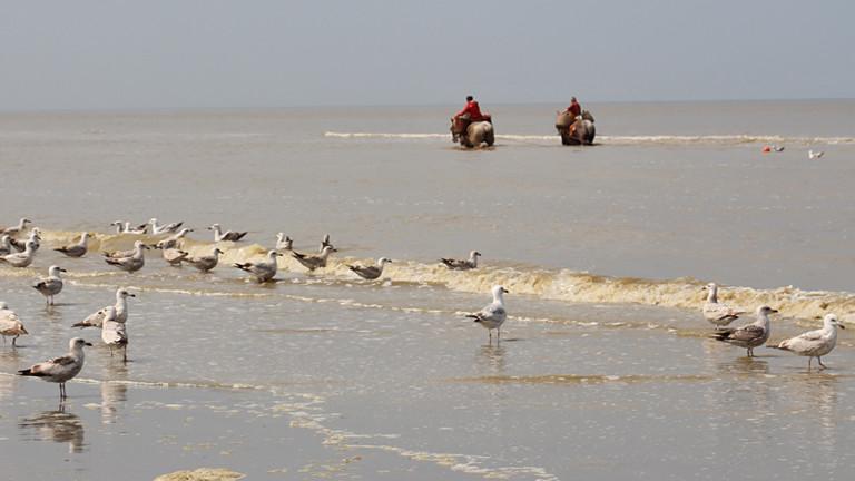 Strand mit Möwen und zwei Männern auf Pferden, die in Strandnähe langsam durch das Meer reiten.