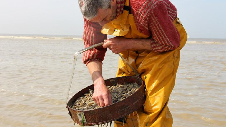Bernard Debruyne steht in gelber Ölhose im Wasser und durchsucht ein Netz mit Krabben.
