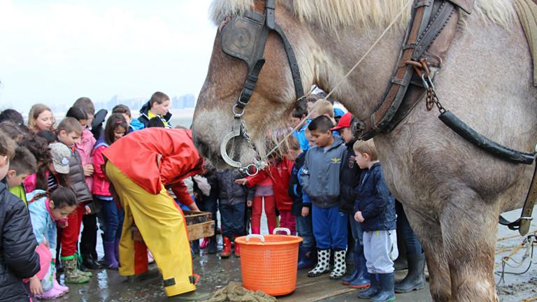 Kinder stehen im Kreis uns schauen in einen Korb. Im Vordergrund steht ein Pferd mit Scheuklappen.