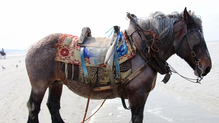 Ein Pferd steht am Strand mit Decken und einem einfachen Sattel auf dem Rücken.